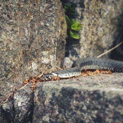 Week 26 - Snake